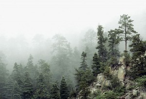 Morning Fog, Schweer Ridge